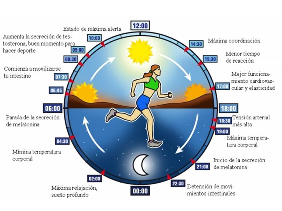 cronobiologia alimentação ritmos corpo